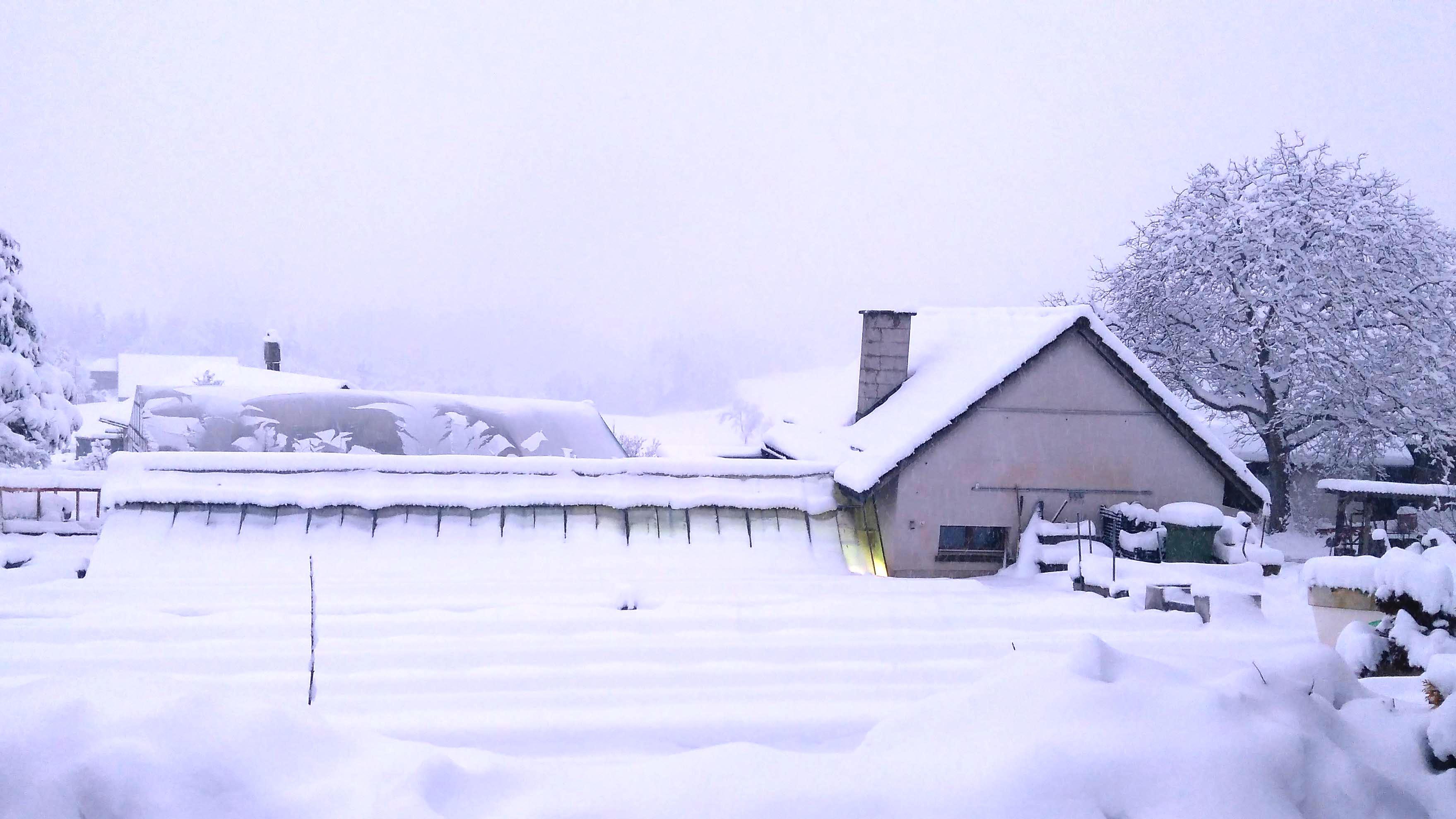 Ein ideales Winterquartier ermöglicht sogar Fruchtbildung